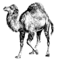 Perl-camel-small.png